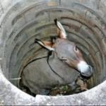 Motivational Story of Donkey in Hindi