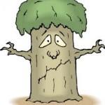 पेड़ों की समस्या