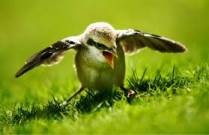 उड़ान भरता पक्षी