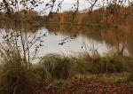 गन्दा तालाब Dirty Pond in Hindi