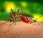 Dengue Symptoms in Hindi
