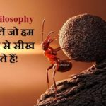 Ant Philosophy in Hindi
