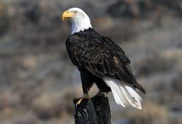 bachon ki kahaniyan Eagle Teachings