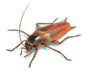 cockroach theory in Hindi कॉकरोच थ्योरी