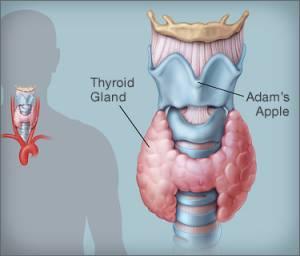 Thyroid Symptoms in Hindi