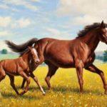 बादल और राजा – दो घोड़ों की कहानी