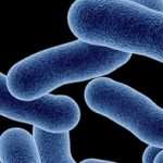 Listeriosis Symptoms Cause Treatment in Hindi