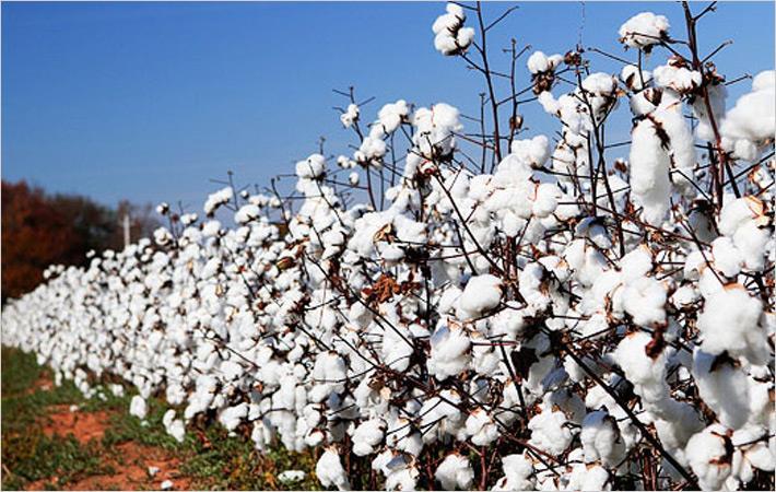 भारत का कपड़ा उद्योग