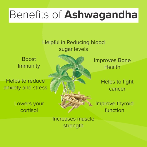 Ashwagandha Benefits in Hindi अश्वगंधा के फायदे